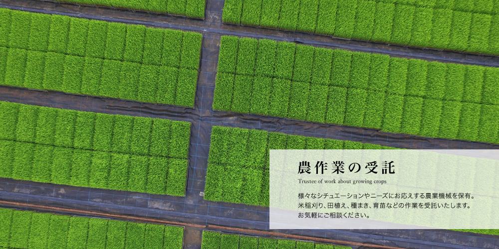 農作業の受託/様々なシチュエーションやニーズにお応えする農業機械を保有。米稲刈り、田植え、種まき、育苗などの作業を受託いたします。お気軽にご相談ください。