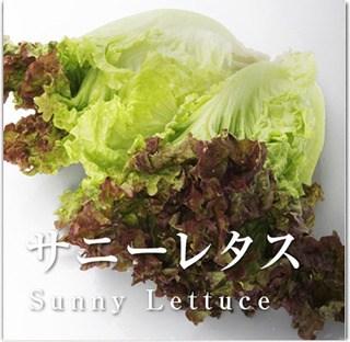 sunny_lettuce_main-thumb-320xauto-2615